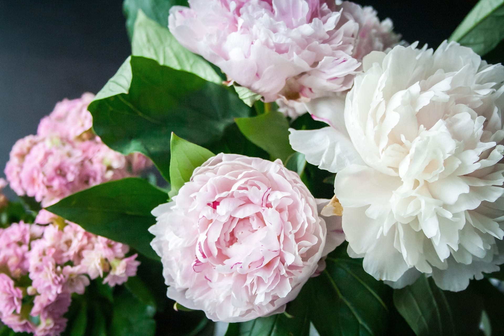 Different types of peony flowers you should know about