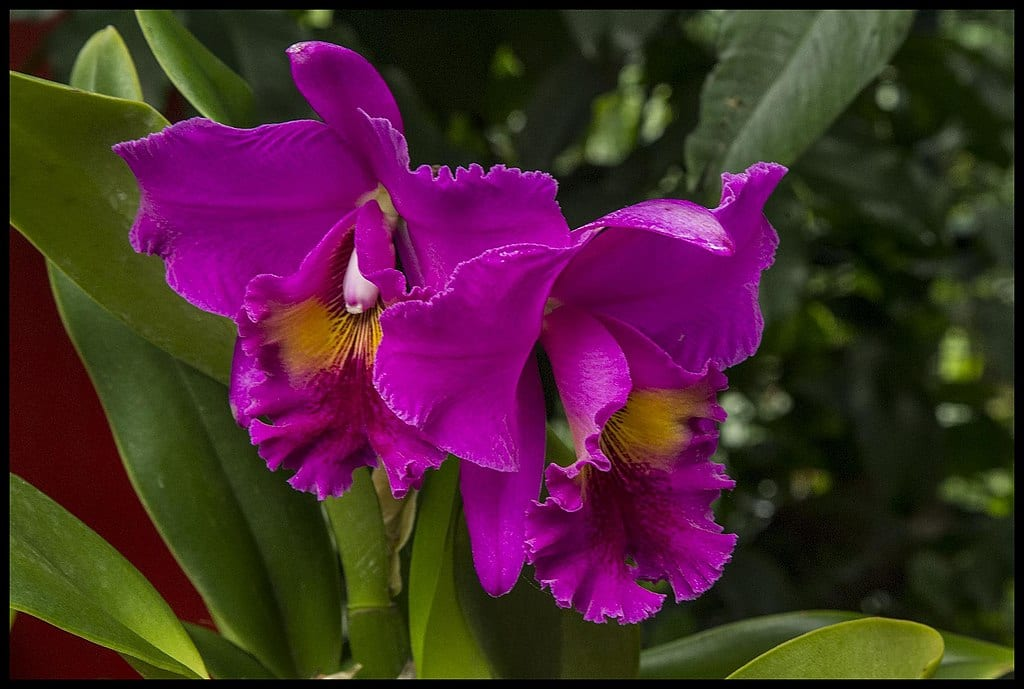 Tropical Flowering Plants You Must Have in Your Backyard