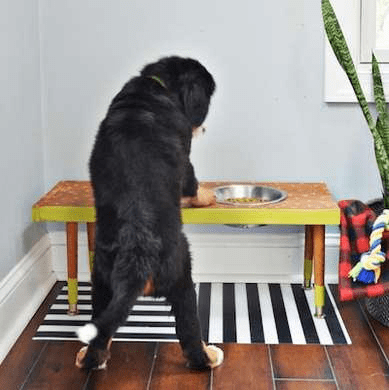 Wooden dog food table