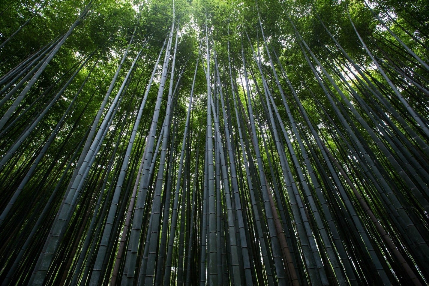 Is Bamboo Wood