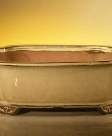 Beige Ceramic Bonsai Pot - Rectangle 10 x 8 x 3.125