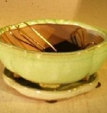 Woodlawn Green Ceramic Bonsai Pot Round Petal Shape 6.0 x 4.75 x 2.5