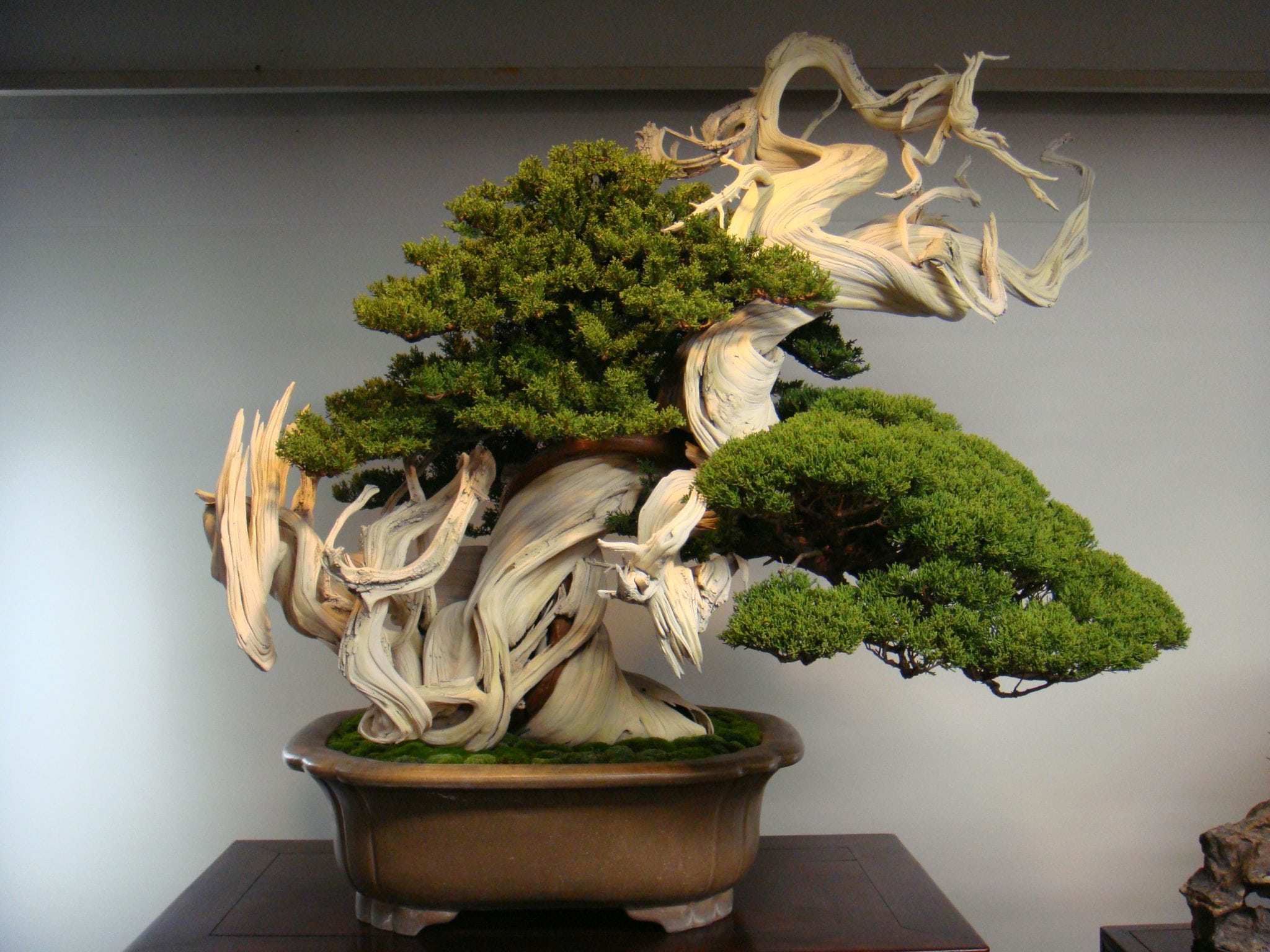 Bonsai Longevity