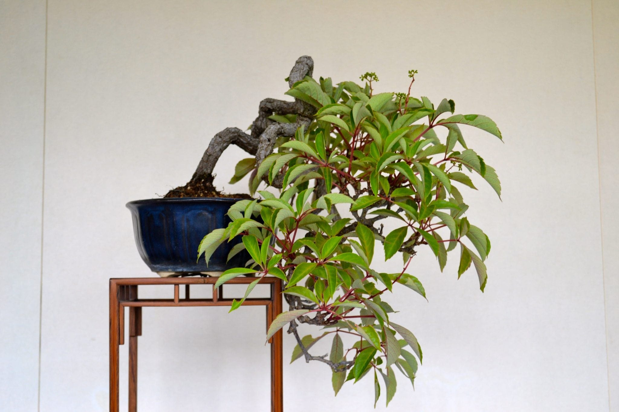 Bonsai Tree Harvesting Wild Plants