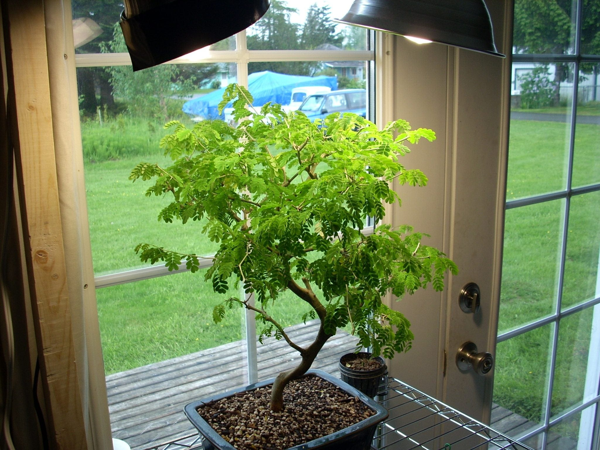 Bonsai Tree Indoor Grow Lights & Bulbs