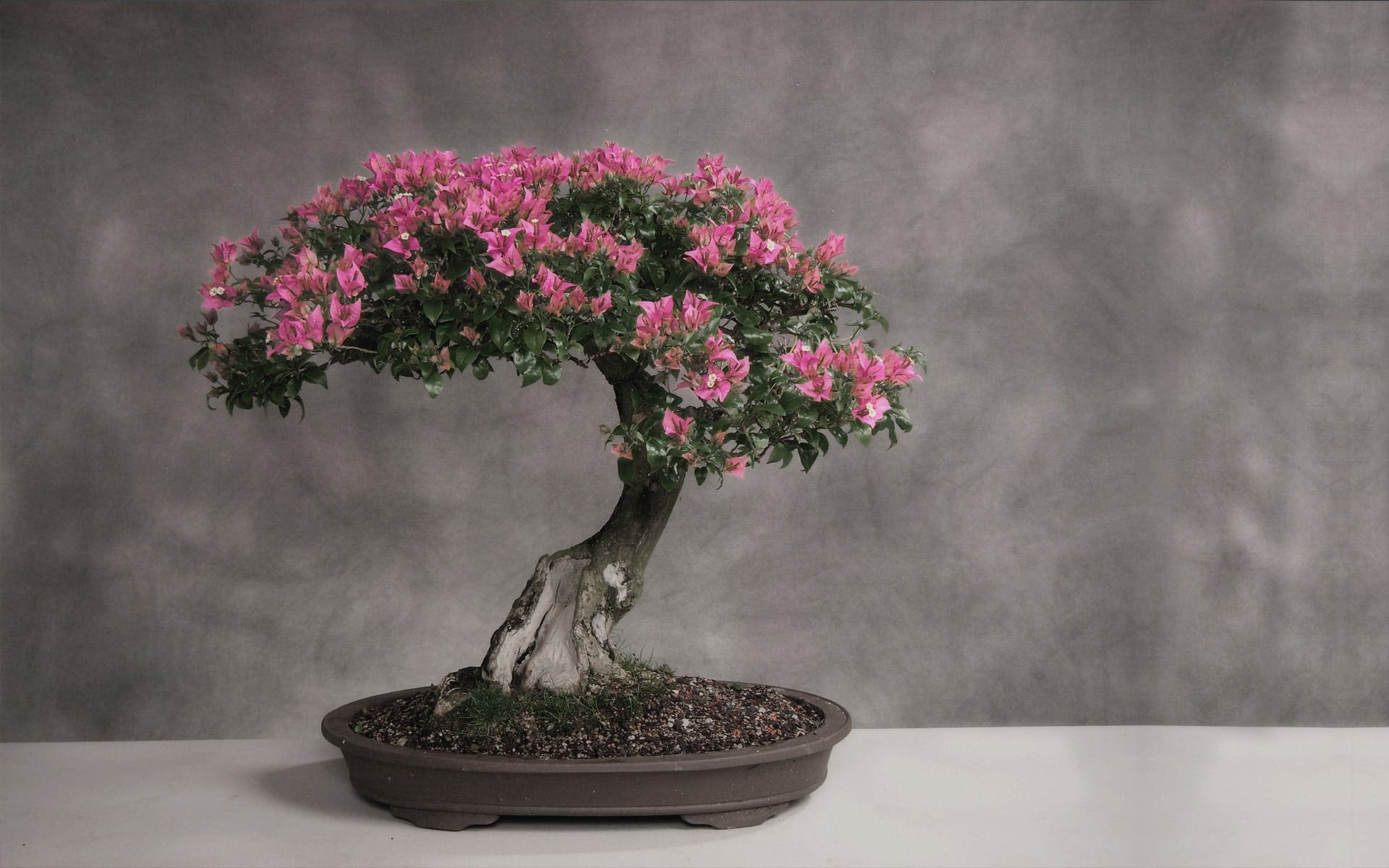 Fake Silk Blossom Trees Made In China Cheap Artificial Plastic Cherry Blossom Tree On Sale Buy Artificial Indoor Cherry Blossom Tree Cherry Blossom Bonsai Tree Mini Cherry Blossom Tree Product On Alibaba Com
