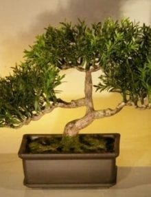 Artificial Japanese Tea Leaf Bonsai Tree For Sale