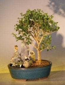 Flowering Mount Fuji Serissa Bonsai Tree For Sale - Medium Stone Landscape Scene (serissa foetida)