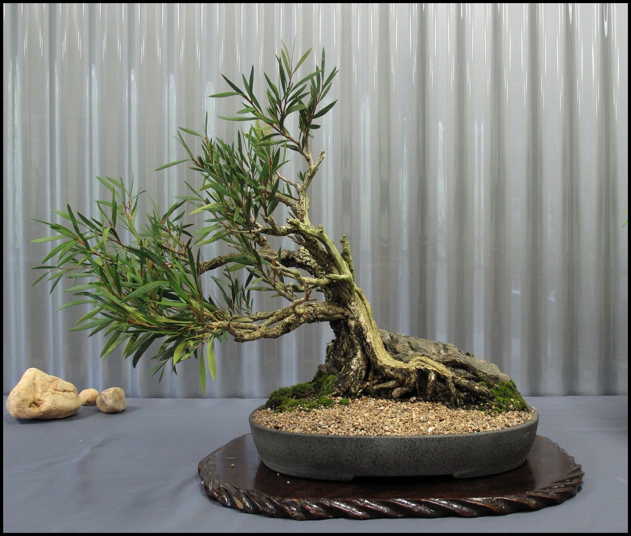Indoor Bonsai Tree Care