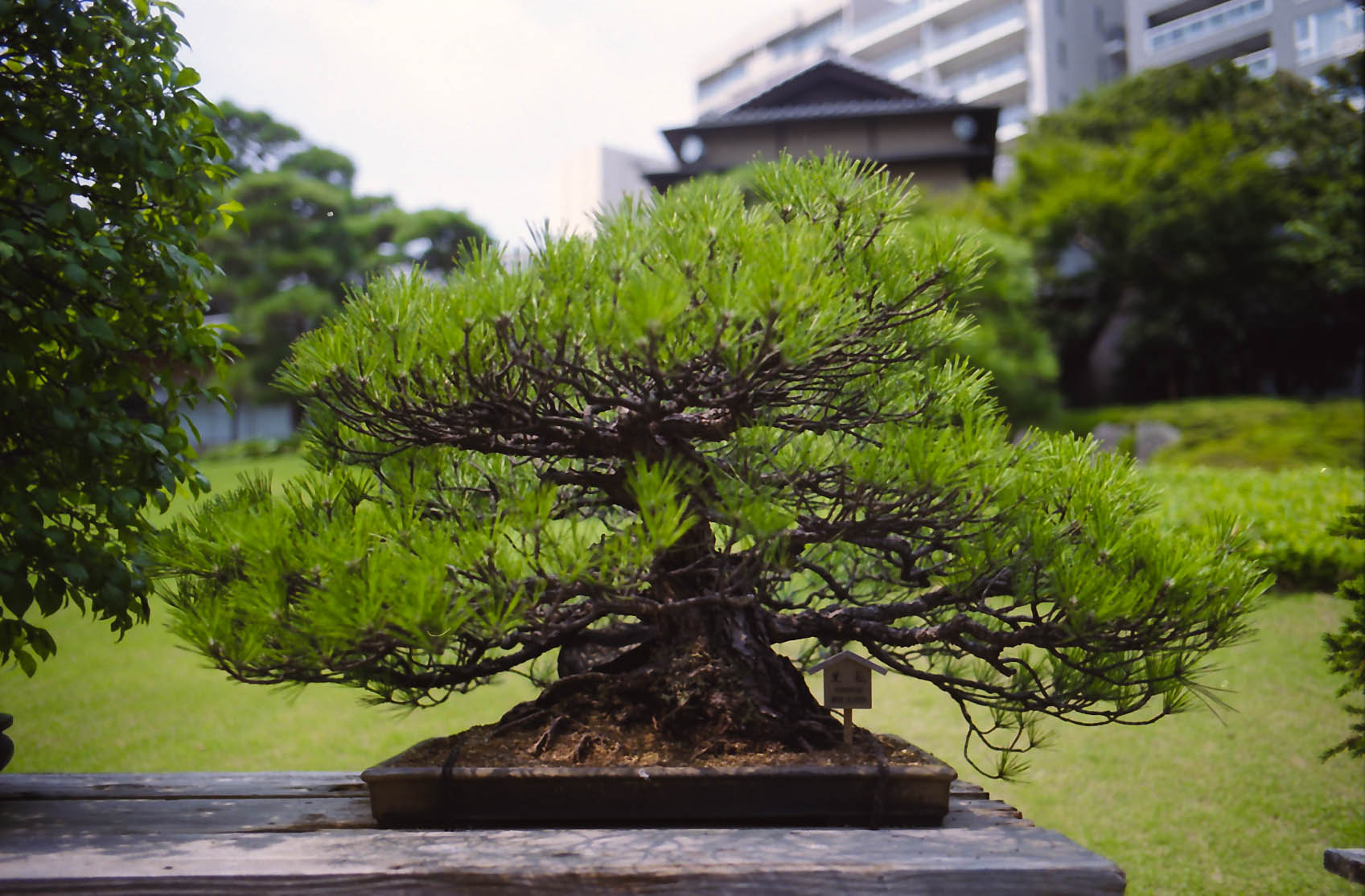 Happo-en Bonsai