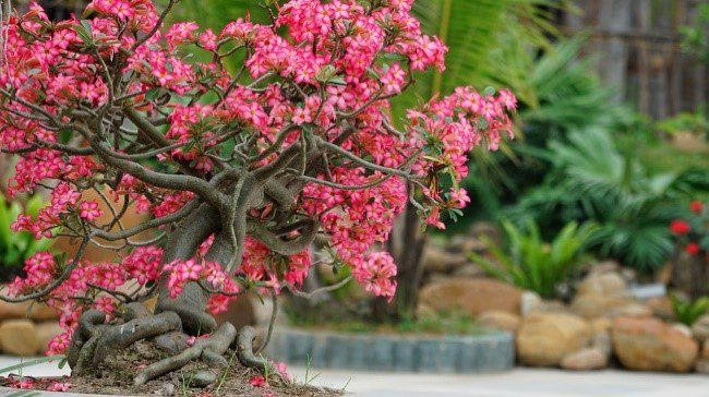 6 Bonsai Trees That Will Warm Up Your Room Bonsai Tree Gardener