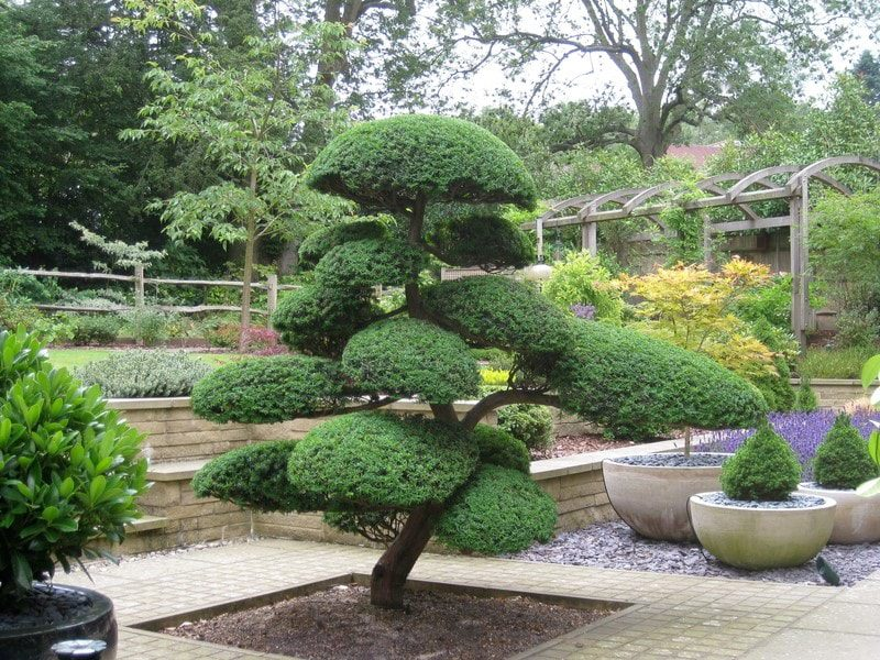 Basics Of Japanese Niwaki Bonsai Tree Gardener